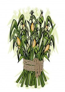 1923092-corn-harvest